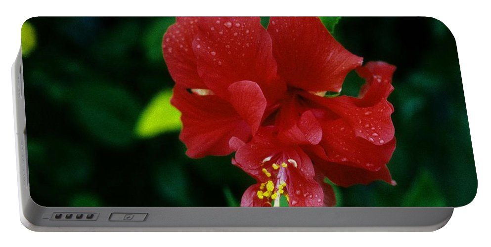 Red Flower Portable Battery Charger featuring the photograph Beauty In The Jungle by Gary Wonning