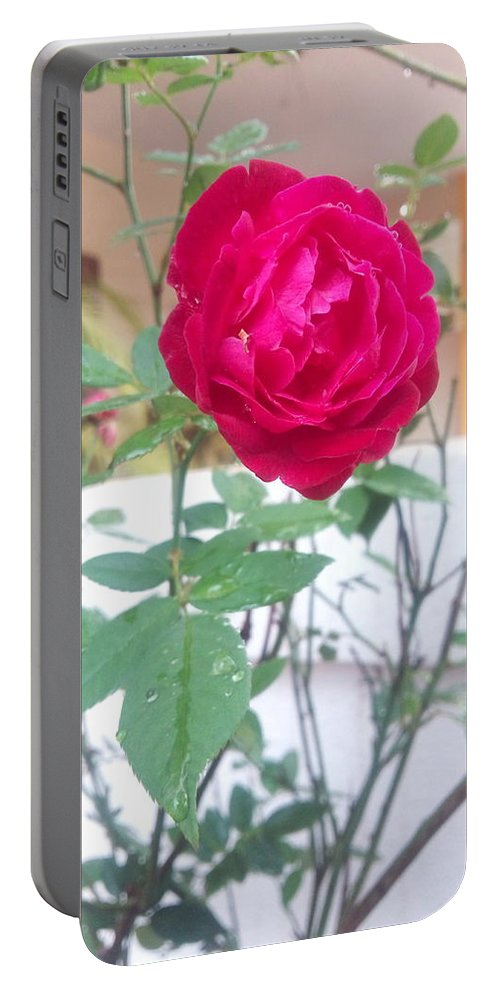Swarup Pagar . Beauty Of Red Rose . Portrait . Indian Photography . International Photography . Professional Photography . Incredible India Portable Battery Charger featuring the photograph Beauty Of Red Rose by Swarup Pagar