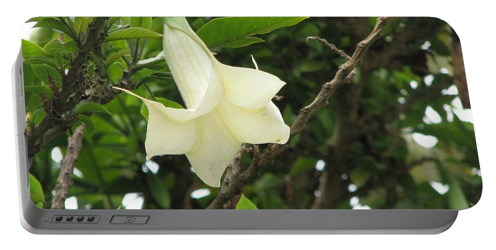 Flower Portable Battery Charger featuring the photograph Beauty by Sandra Bourret