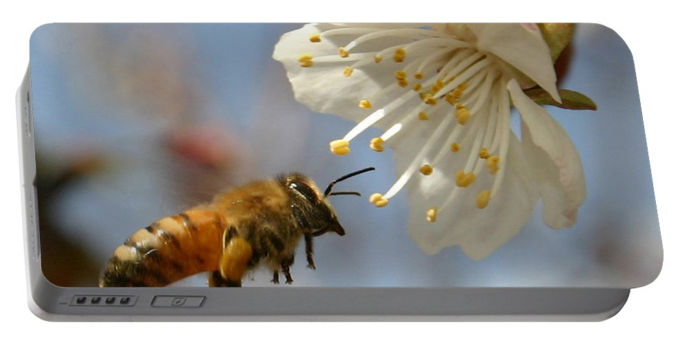 Honey Portable Battery Charger featuring the photograph Bee And A Blossom by Danny Yanai