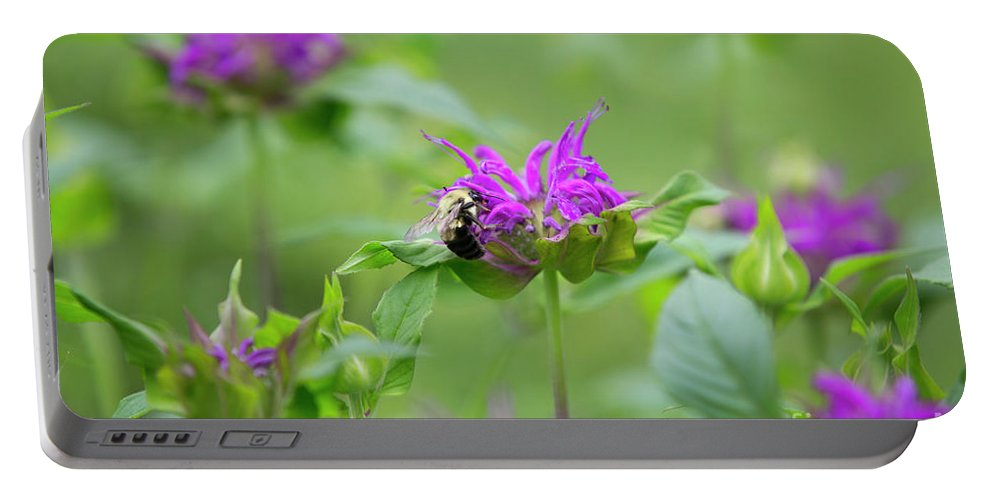 Monarda Portable Battery Charger featuring the photograph Bee Balm by Diane Diederich