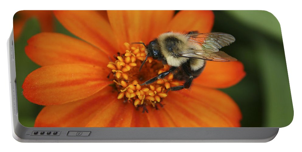 Bee Portable Battery Charger featuring the photograph Bee On Aster by Margie Wildblood