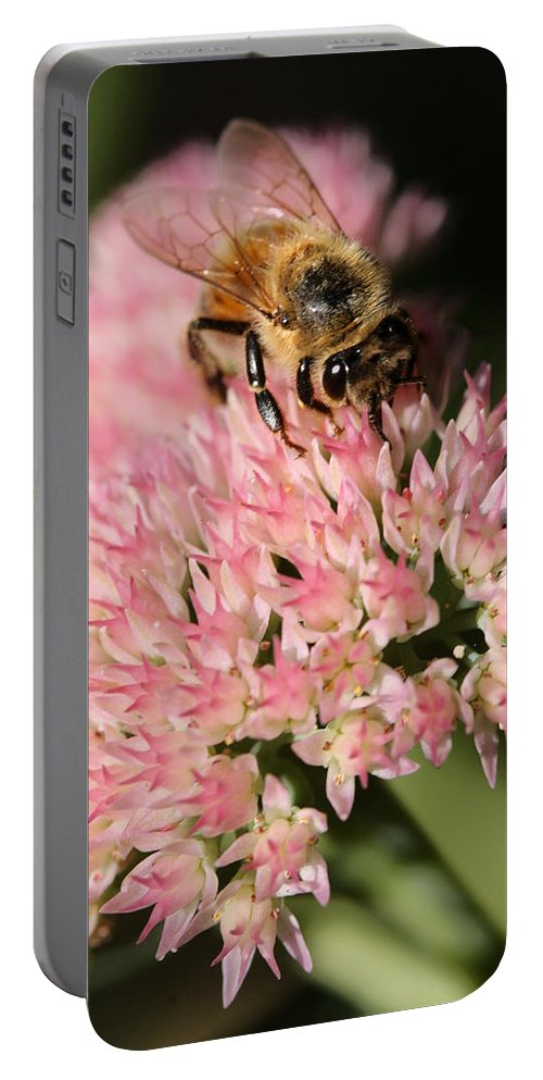 Bee Portable Battery Charger featuring the photograph Bee On Flower 4 by Angela Rath