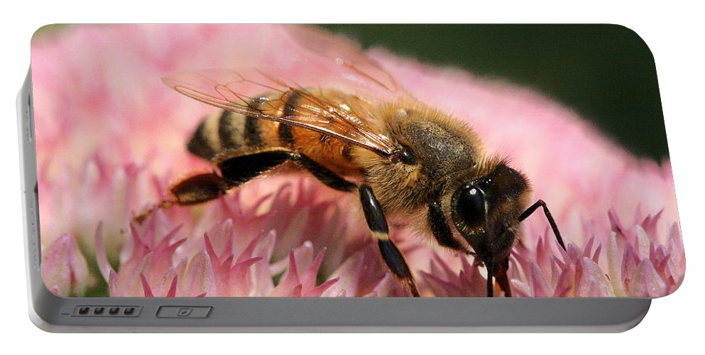 Bee Portable Battery Charger featuring the photograph Bee On Flower 6 by Angela Rath