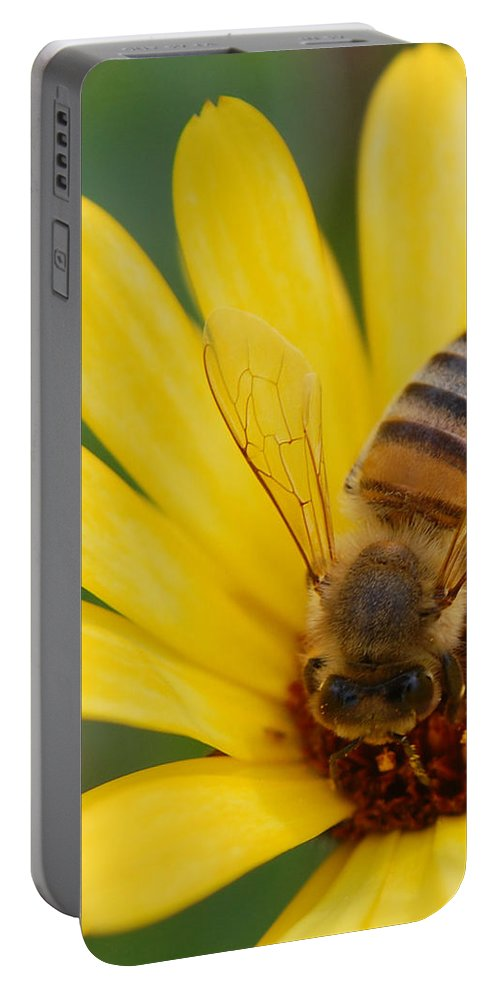 Bee Portable Battery Charger featuring the photograph Bee On Flower by Amy Fose