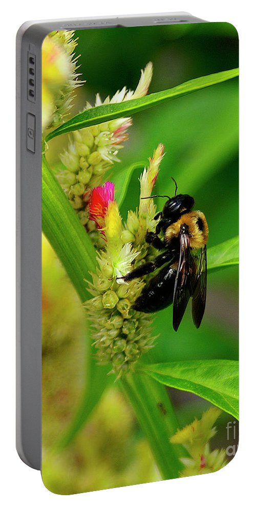 Nature Portable Battery Charger featuring the photograph Bee On Flower by Susan Cliett