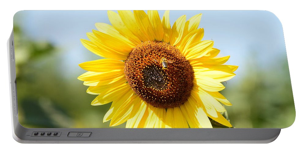 Sunflower Portable Battery Charger featuring the photograph Bee On Yellow Sunflower by Miomir Magdevski