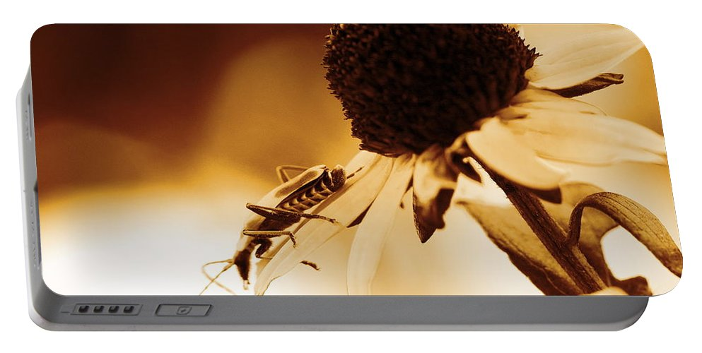 Leatherwing Portable Battery Charger featuring the photograph Beetle And Black Eyed Susan by Angela Rath