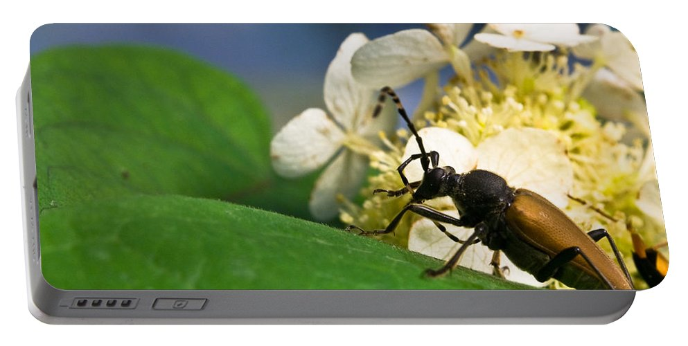 Crossville Portable Battery Charger featuring the photograph Beetle Preening by Douglas Barnett