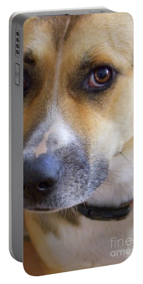 Kauai Animals Portable Battery Charger featuring the photograph Bella by Mary Deal
