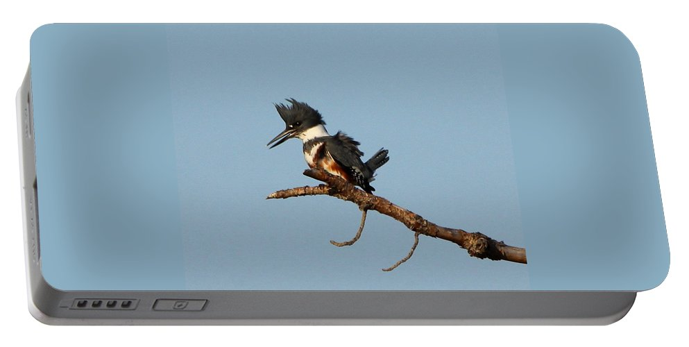 Belted Kingfisher Portable Battery Charger featuring the photograph Belted Kingfisher by Barbara Bowen