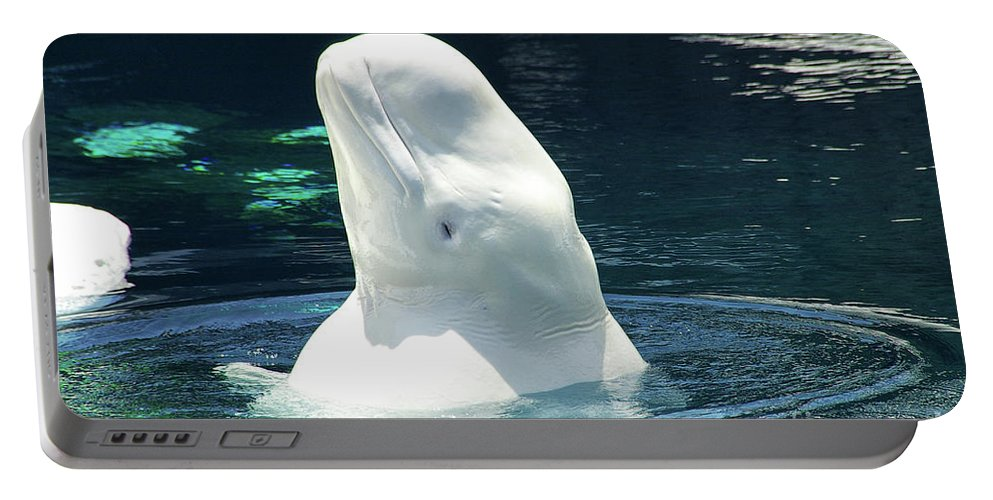 Beluga Portable Battery Charger featuring the photograph Beluga Whale by Mariola Bitner
