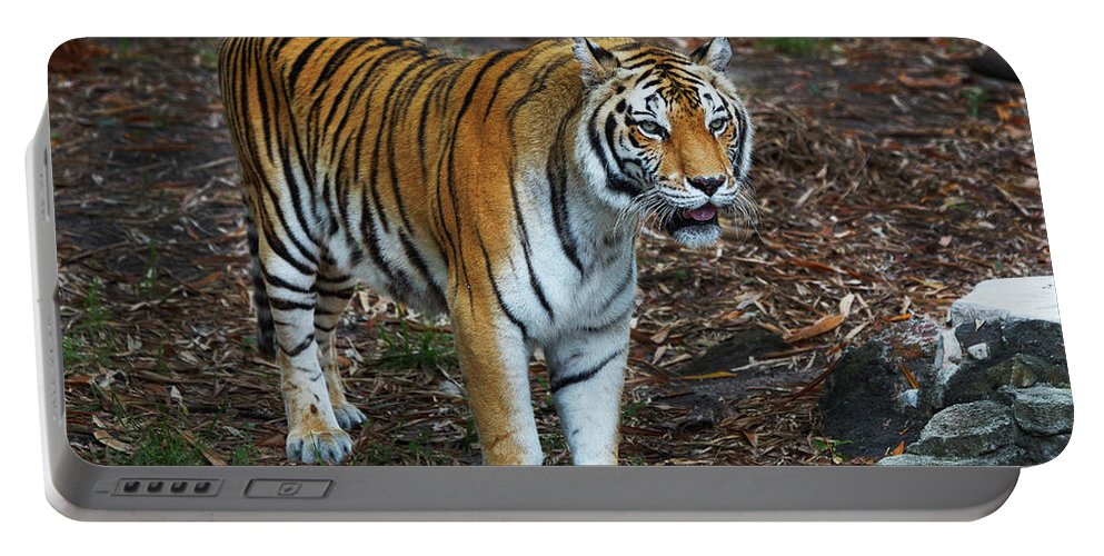Tiger Portable Battery Charger featuring the photograph Bengal Tiger by Bruce Beck