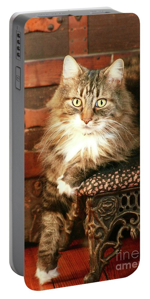 Black Tabby / Maine Coon Portable Battery Charger featuring the photograph Beo Woof Posed by Gregory E Dean
