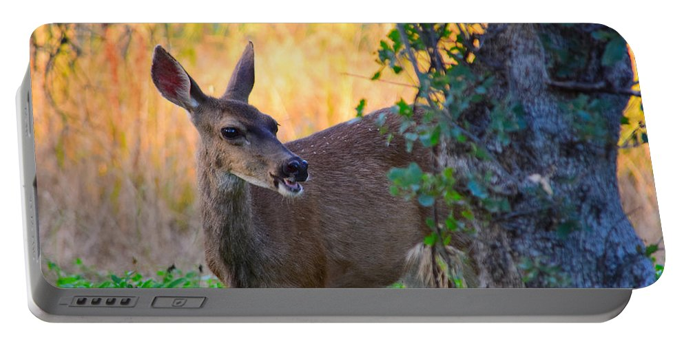 Deer Portable Battery Charger featuring the photograph Betty Doe by Alan C Wade