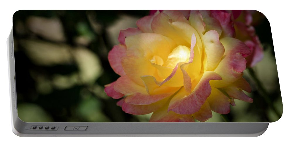 Rose Portable Battery Charger featuring the photograph Bettys Rose by Teresa Mucha