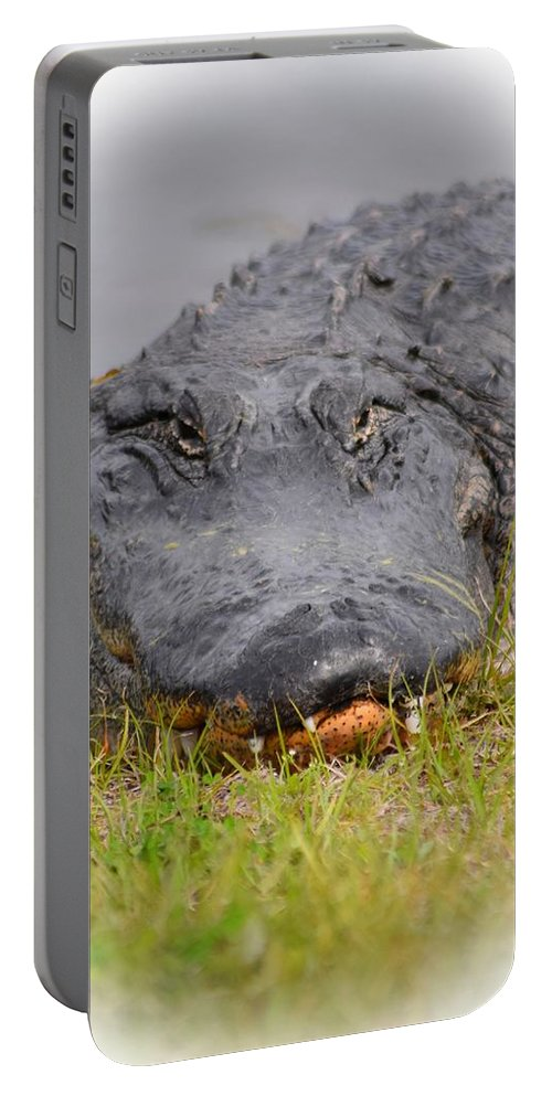 Alligator Portable Battery Charger featuring the photograph Big Boy Gator 2 by Sheri McLeroy