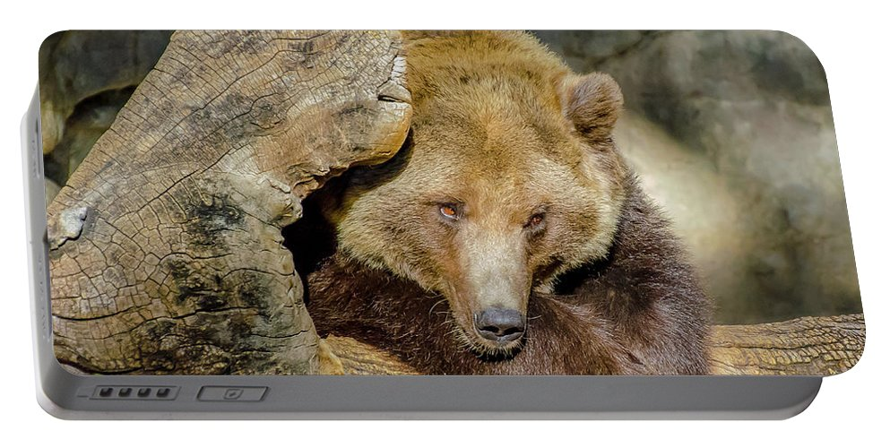 Brown Portable Battery Charger featuring the photograph Big Brown Bear by Domingo Washington