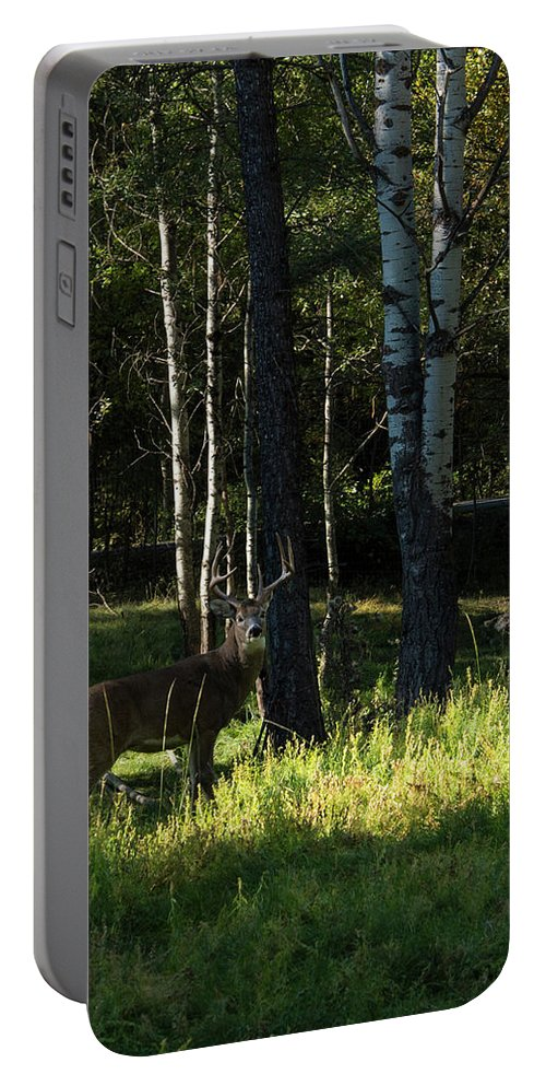 Deer Portable Battery Charger featuring the photograph Big Buck by Roy Nierdieck