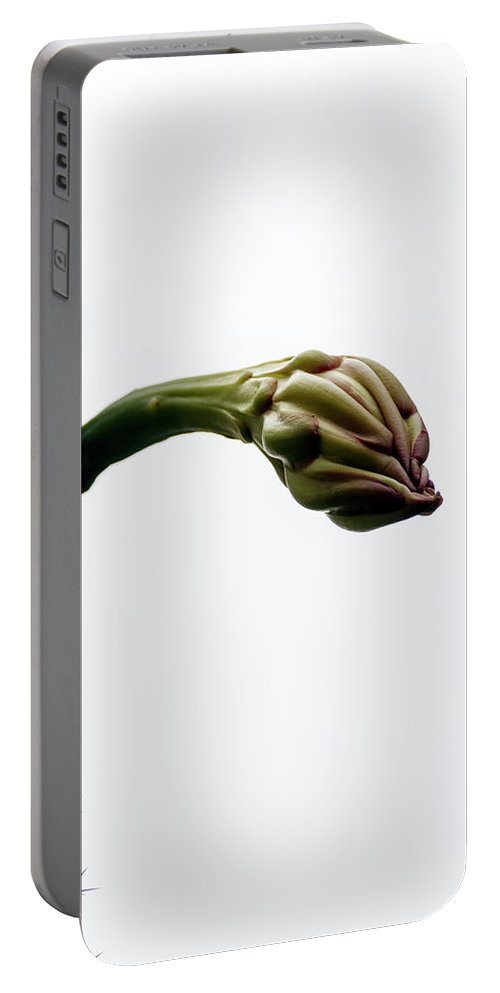 Big Portable Battery Charger featuring the photograph Big Bud Of Cactus Flower Close-up by Emma Grimberg