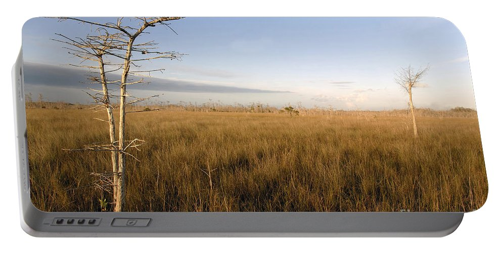 Bald Cypress Portable Battery Charger featuring the photograph Big Cypress by David Lee Thompson