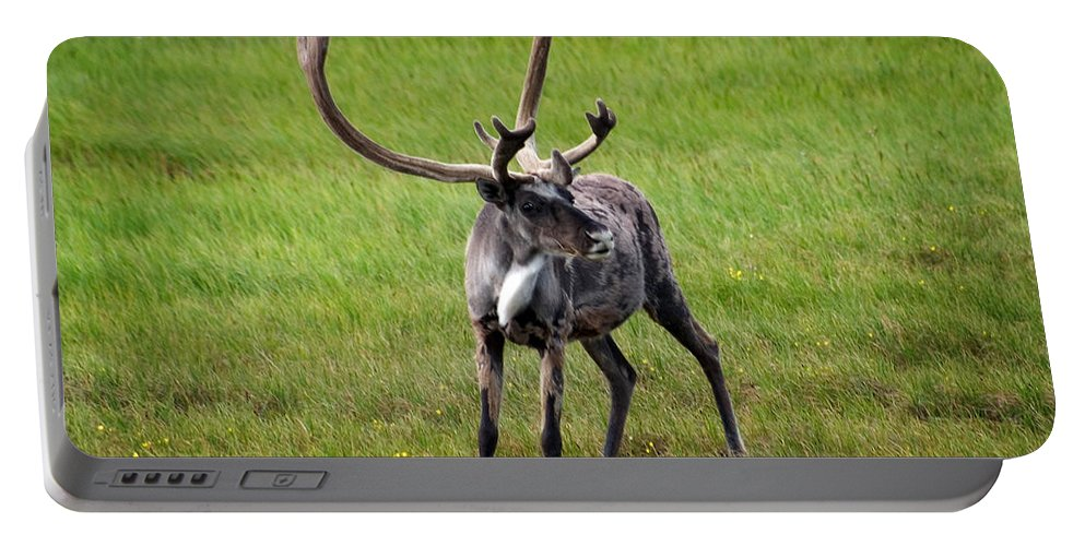 Caribou Portable Battery Charger featuring the photograph Big Horn by Anthony Jones