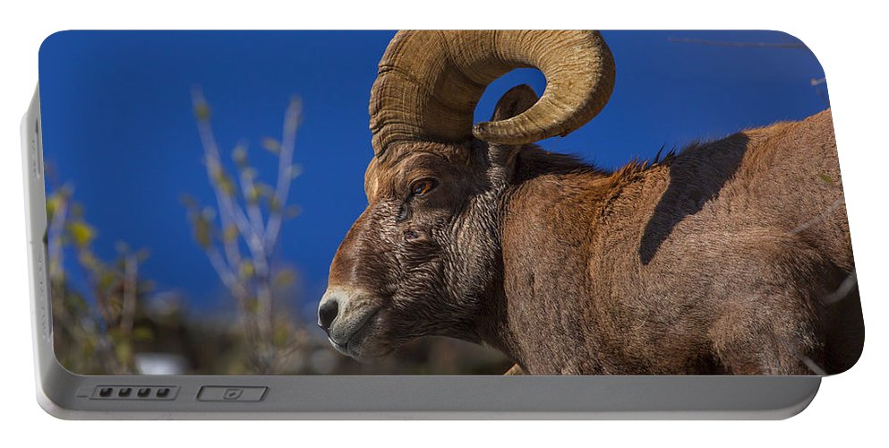 Wildlife Portable Battery Charger featuring the photograph Big Horn Looking Down by Jeff Shumaker