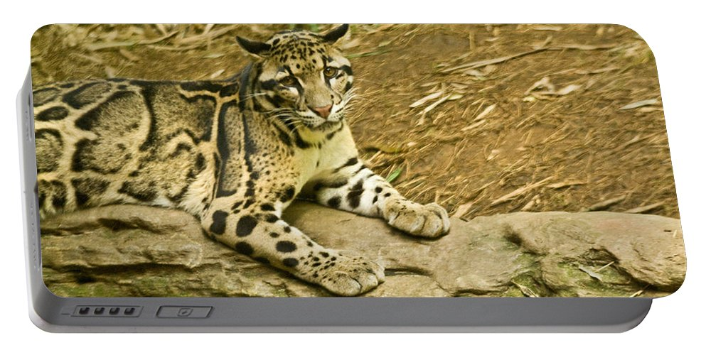 Cat Portable Battery Charger featuring the photograph Big Kitty Cat by Douglas Barnett