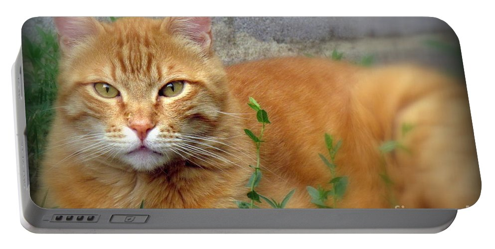 Nacho. The Big Orange Cat. Photographed At Home On June 28th 2016. Portable Battery Charger featuring the photograph Big O by Krista Carofano