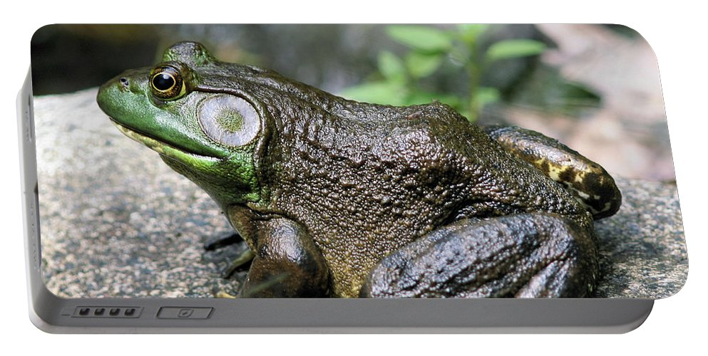 Animal Portable Battery Charger featuring the photograph Big Old Bullfrog by Smilin Eyes Treasures