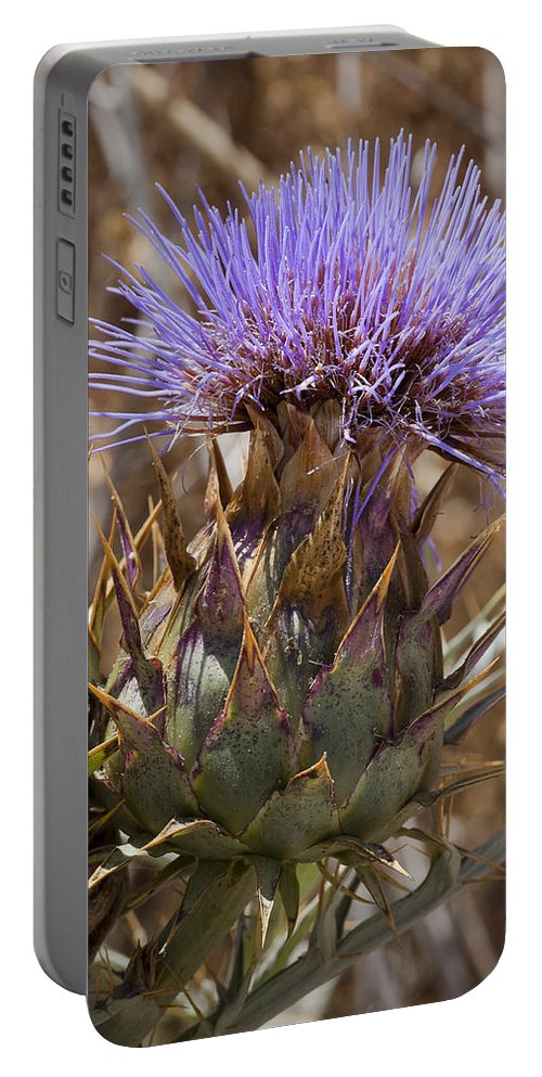 Artichoke Thistles Portable Battery Charger featuring the photograph Big Thistle 2 by Kelley King