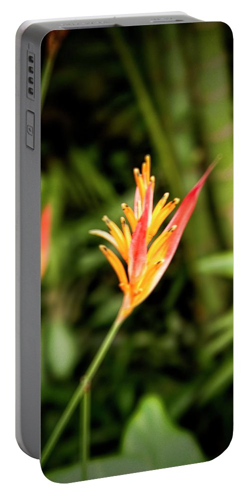 Bird Of Paradise Portable Battery Charger featuring the photograph Bird Of Paradise by Phyllis Taylor