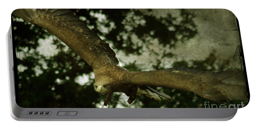 Eagle Portable Battery Charger featuring the photograph Bird Of Prey by Angel Ciesniarska