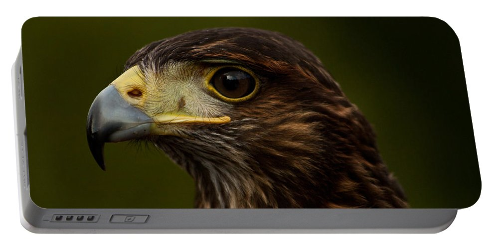 Bird Portable Battery Charger featuring the photograph Bird Of Prey by Dawn OConnor