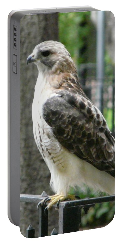 Bird Of Prey Portable Battery Charger featuring the photograph Bird Of Prey by Valerie Ornstein