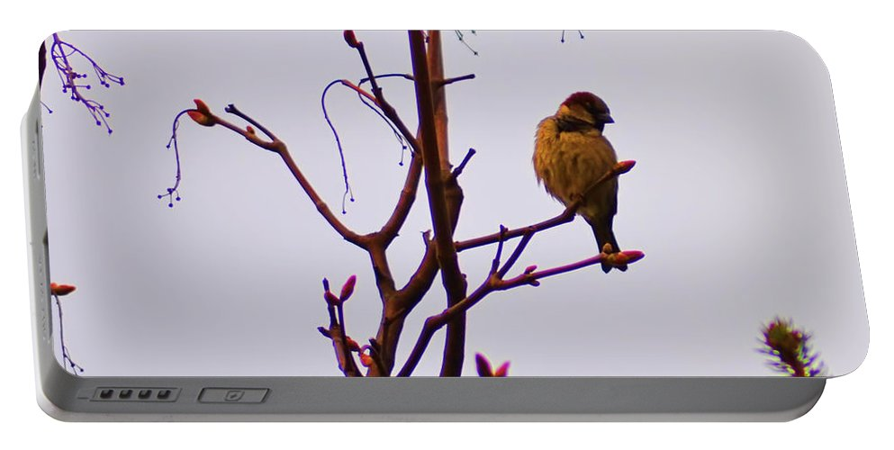 Birds Portable Battery Charger featuring the photograph Bird On A Bud by Bill Cannon