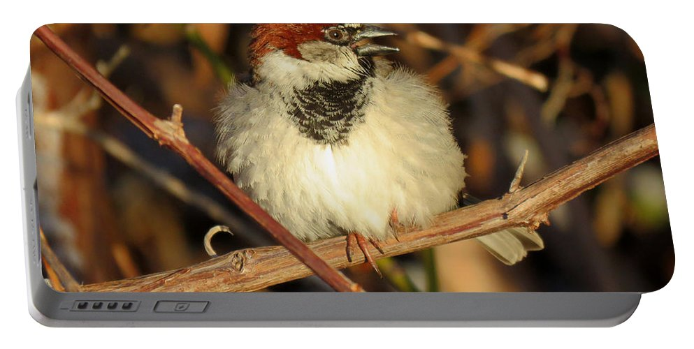 Bird Portable Battery Charger featuring the photograph Bird Song by Dianne Cowen
