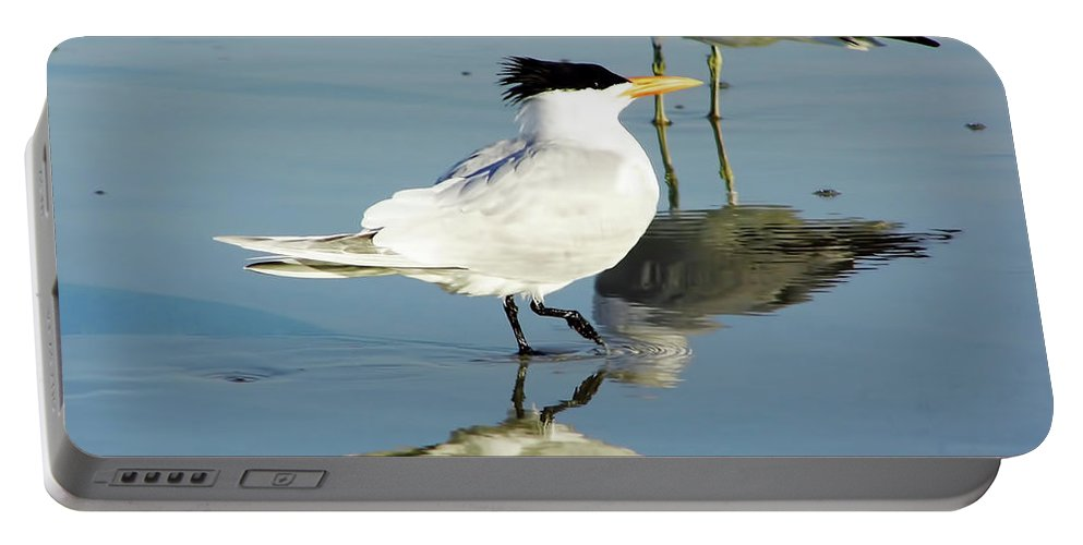 Tern Portable Battery Charger featuring the photograph Bird - Tern - Reflection by D Hackett