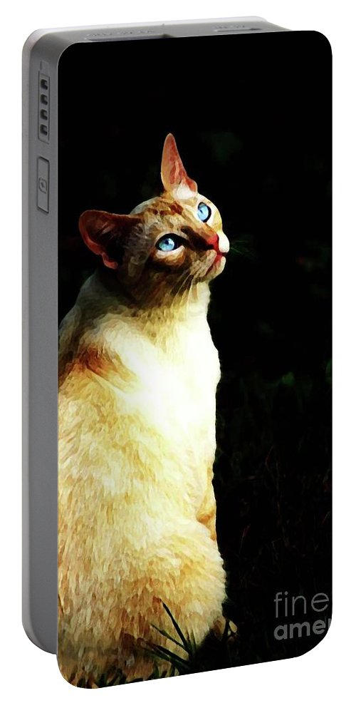Cat Portable Battery Charger featuring the photograph Bird Watcher by Kim Henderson