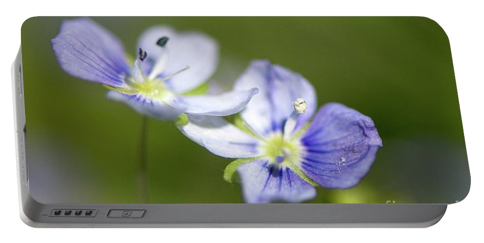 Bird`s Eye Speedwell Portable Battery Charger featuring the photograph Birds Eye Speedwell by Sharon Talson