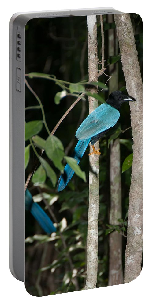 Mexico Quintana Roo Portable Battery Charger featuring the digital art Birds From Coba by Carol Ailles