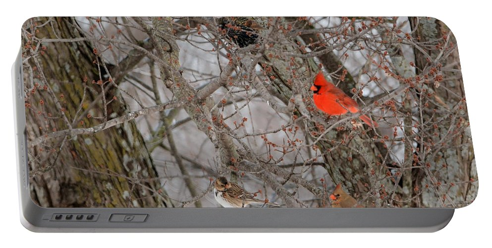Wildlife Portable Battery Charger featuring the photograph Birds Of A Feather by Pamela Peters