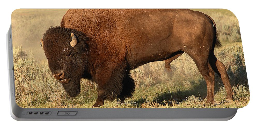 Bison Portable Battery Charger featuring the photograph Bison Huffing And Puffing For Herd by Max Allen