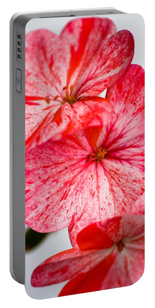 Bizzy Lizzy Portable Battery Charger featuring the photograph Bizzy Lizzy by Brian Roscorla