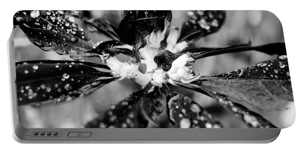 Black And White Portable Battery Charger featuring the photograph Black And White Flower by Amy Fose