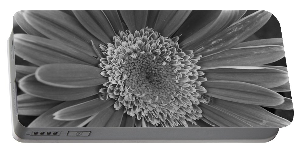 Flower Portable Battery Charger featuring the photograph Black And White Gerber Daisy 4 by Amy Fose