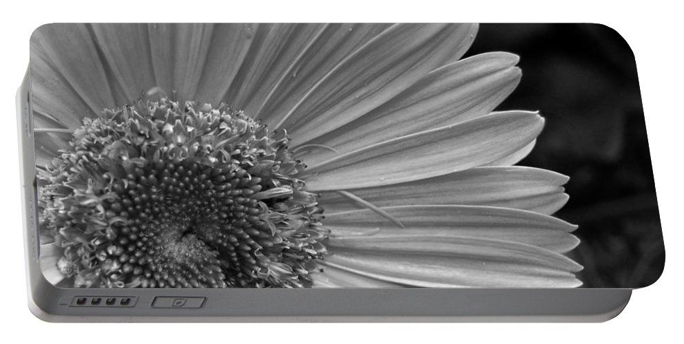 Flower Portable Battery Charger featuring the photograph Black And White Gerber Daisy 5 by Amy Fose