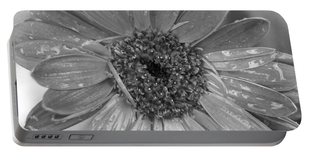 Gerber Daisy Portable Battery Charger featuring the photograph Black And White Gerbera Daisy by Amy Fose