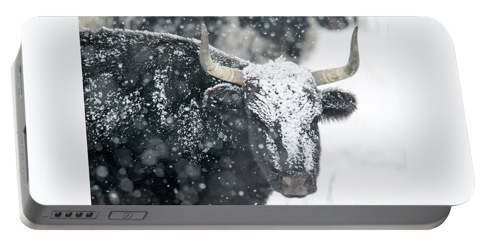 Longhorn Portable Battery Charger featuring the photograph Black And White by Mike Dawson