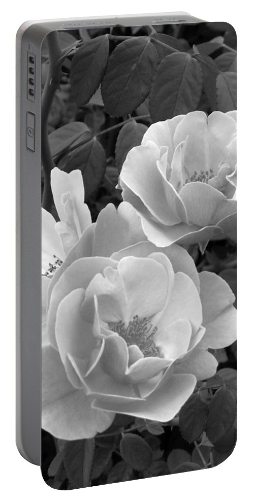 Rose Portable Battery Charger featuring the photograph Black And White Roses 1 by Amy Fose